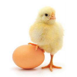 Комбикорма для цыплят
